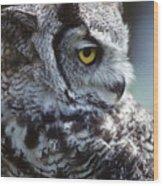 Lazy Owl Wood Print