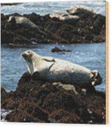 Lazy Seal Wood Print