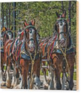 Leading The Way-budweiser Clydesdales Wood Print