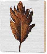 Leaf 0787 Wood Print