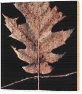 Leaf 22 Wood Print