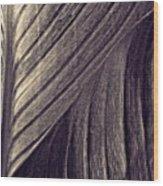 Leaf Abstract  24  Sepia   Wood Print