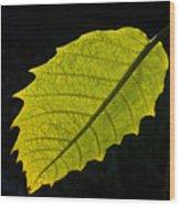 Leaf Aglow Wood Print
