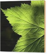 Greenvein  Wood Print