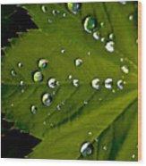 Leaf Covered In Raindrops Wood Print