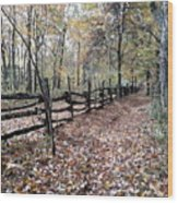 Leaf Covered Trail Wood Print