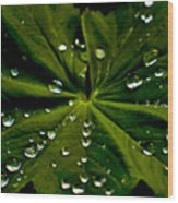 Leaf Covered With Water Droplets Wood Print