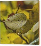 Leaf Dew Wood Print