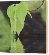 Leaf Drop Wood Print