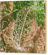 Leaf Eaten By Insects Wood Print