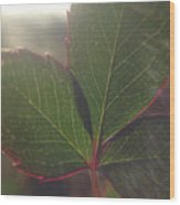 Leaf Flare Wood Print