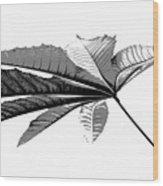Leaf In Black And White Wood Print