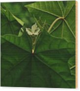 Leaf In The Middle Wood Print