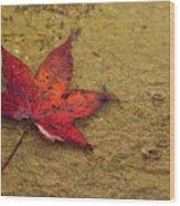 Leaf In The Rain Nature Photograph Wood Print