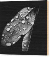 Leaf It Wood Print
