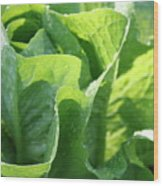 Leaf Lettuce Wood Print
