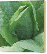 Leaf Lettuce Part 3 Wood Print