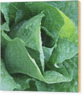 Leaf Lettuce Part 4 Wood Print
