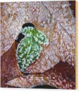 Leaf Wood Print
