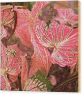 Leaf Of Color Wood Print