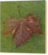 Leaf On Algae Wood Print