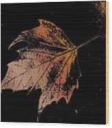 Leaf On Bricks Wood Print
