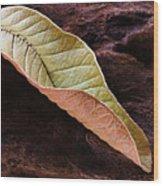 Leaf On Log- St Lucia Wood Print