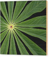 Leaf Pattern Wood Print