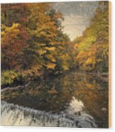 Leaf Peeping Wood Print