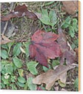 Leaf Standing Out In A Crowd Wood Print