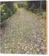 Leaf-strewn Trail Wood Print