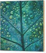 Leaf Study #4 Wood Print
