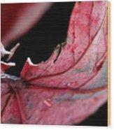 Leaf Study I Wood Print