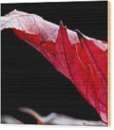 Leaf Study IIi Wood Print