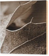 Leaf Study In Sepia II Wood Print