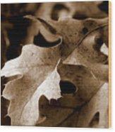 Leaf Study In Sepia IIi Wood Print