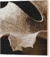 Leaf Study In Sepia Wood Print