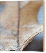 Leaf Study Vii Wood Print