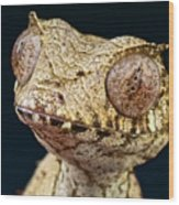Leaf-tailed Gecko Wood Print