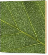 Leaf Textures Wood Print