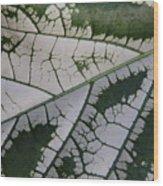 Leaf Variegated 1 Wood Print