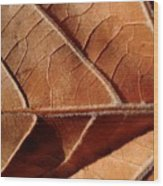 Leaf Veins Wood Print