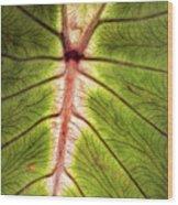 Leaf With Veins Wood Print