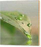 Leaf With Water Droplets Wood Print