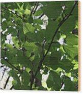 Leaf Xray Wood Print