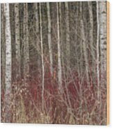 Leafless Color Wood Print