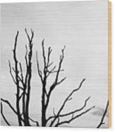 Leafless Tree Wood Print