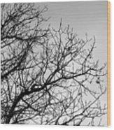 Leafless Twig Wood Print