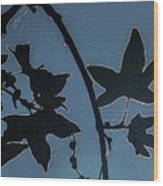 Leafs Backlit Wood Print