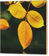 Leafs Over Water Wood Print